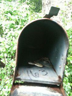 06cb5cb53b4706e8918591e55d23c995--going-postal-mail-boxes.jpg