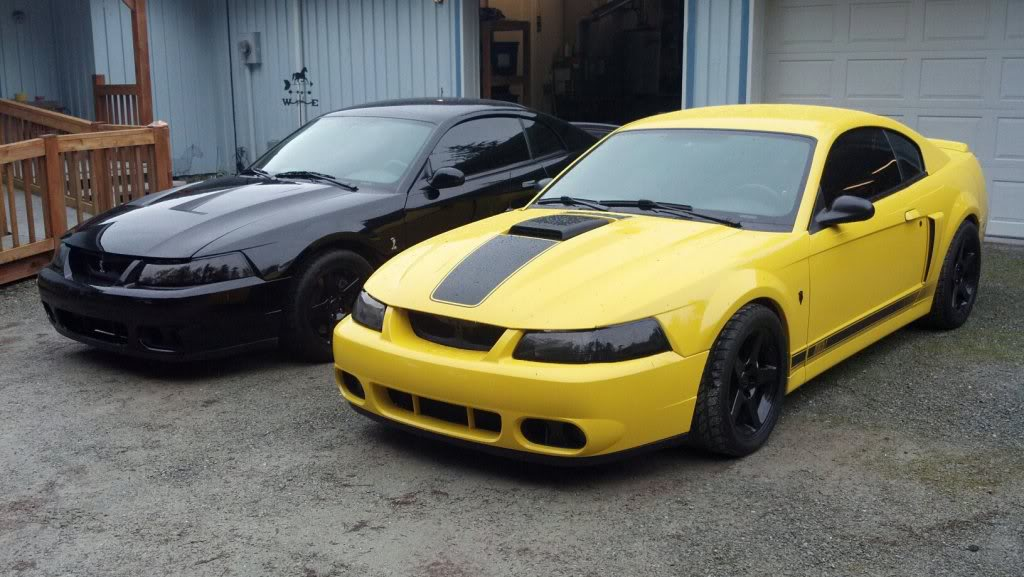 Terminator Cobra Rear Bumper