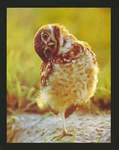 Crooked Owl.jpg