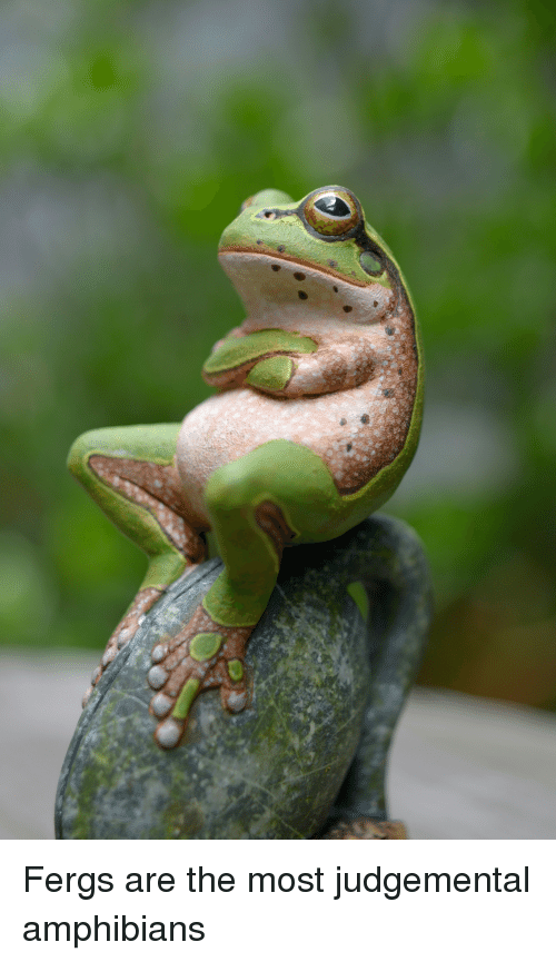 fergs-are-the-most-judgemental-amphibians-36056525.png