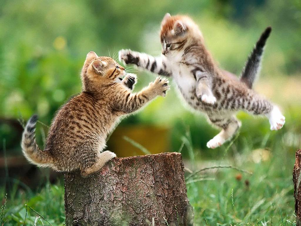 Kittens%2Bwallpapers.jpg
