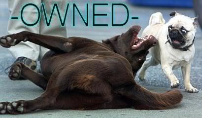 owneddogs.jpg