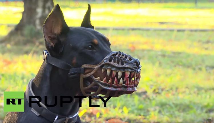 rabid-werewolf-dog-muzle-9552.jpg