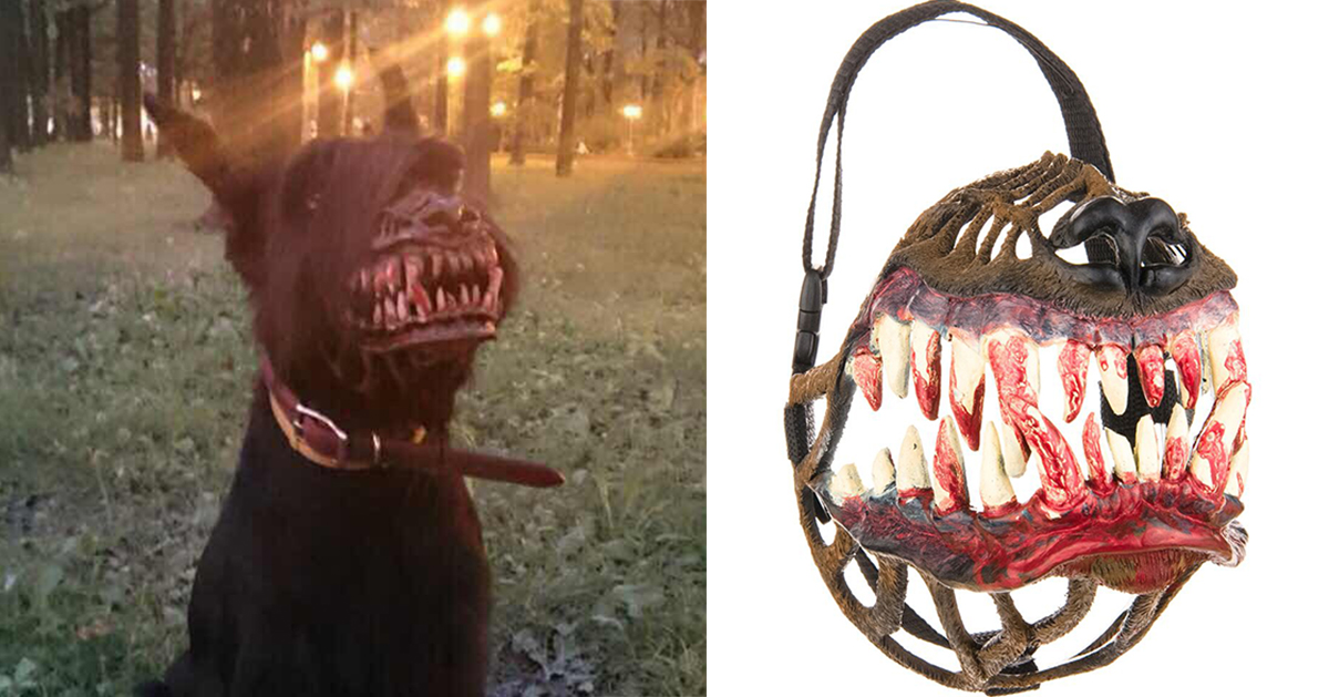 russian-werewolf-dog-muzzle-fb.jpg