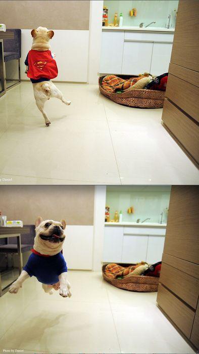 superdog1.png