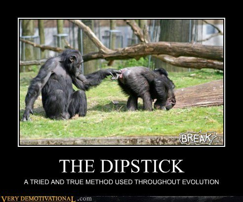 the-dipstick.jpeg