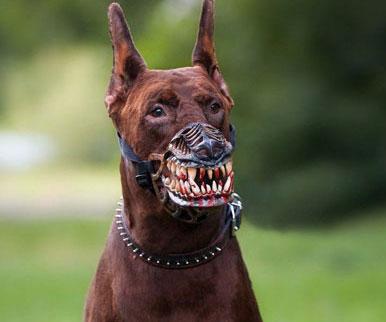 werewolf-dog-muzzle1.jpg
